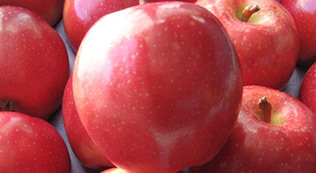 Buy SweeTango Apples Online